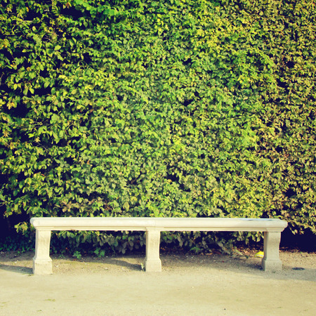 Stone bench and ivy plant wall with retro filter effect photo