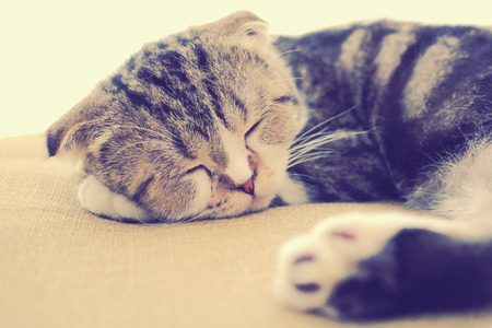 cute cat sleeping on the bed with retro filter effect