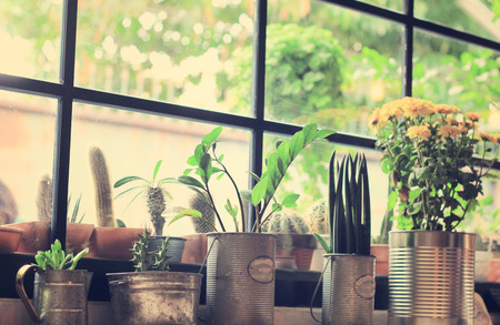 Various of cactus for decorated with retro instagram filter effect