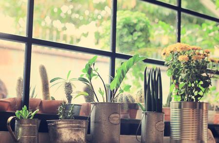 Vari tipi di cactus per decorate con retro instagram effetto del filtro Archivio Fotografico - 35587081