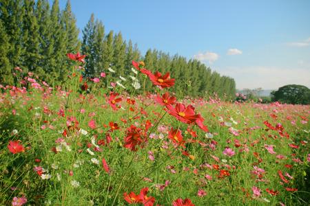 flowered: Landscape of beautiful flowered field Stock Photo