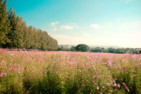 Landscape of beautiful flowered field with retro filter effect photo