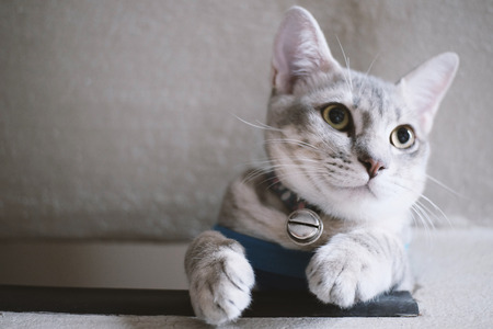 cute kittens: Cute tabby kitten looking from the stair Stock Photo