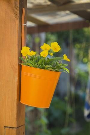 hanging basket: Hanging basket of yellow flowers, outside decor Stock Photo