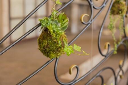 factitious: Decorative green shrub in form of ball, decor