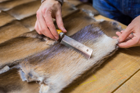 Professional male skinner, furrier working with mink fur skin at atelier, workshop. Fashion and leatherwork concept