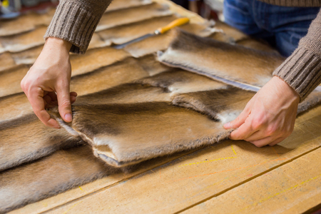 Professional male skinner, furrier working with mink fur skin at atelier, workshop. Fashion and leatherwork concept Banco de Imagens