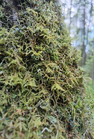 Beautiful green moss on the floor, moss closeup, macro.