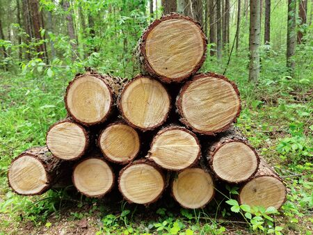 Pile of cut timber background Stock Photo