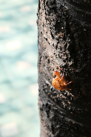 departing: Cicada dreams of departing Stock Photo