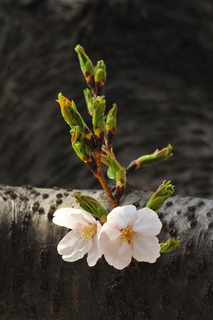 Close-ups of pretty blossoms