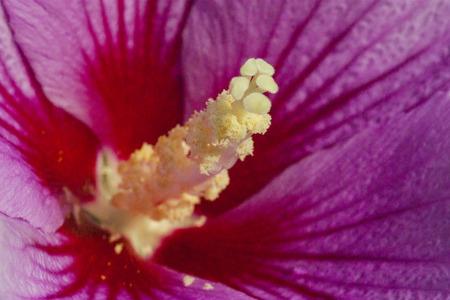 The national flower of Korea Zdjęcie Seryjne - 80843459