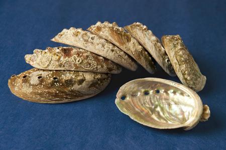 Abalone Shell in closeup shot