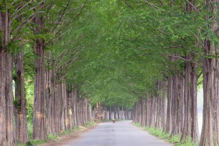 Edged with rows of metaswekwaieo, street [roadside] trees,