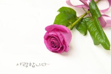 Rose flower with i love you word