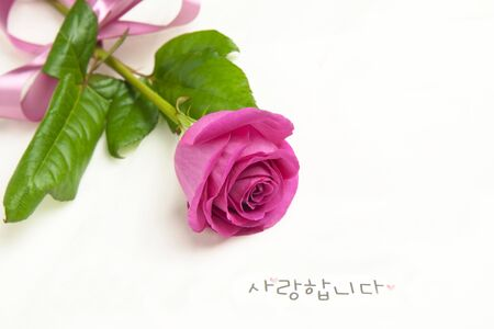 Rose flower and i love you word