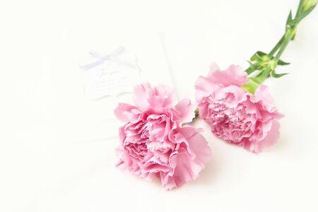 carnation, Parents' Day, congratulation, love, gift, flower, pink Zdjęcie Seryjne