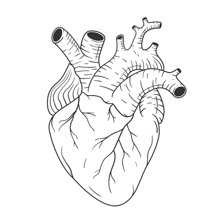 Human heart anatomically correct hand drawn line art. Anatomy of the internal organ. Black flash tattoo, t-shirt print design, element for valentines day card. Vector illustration on white background
