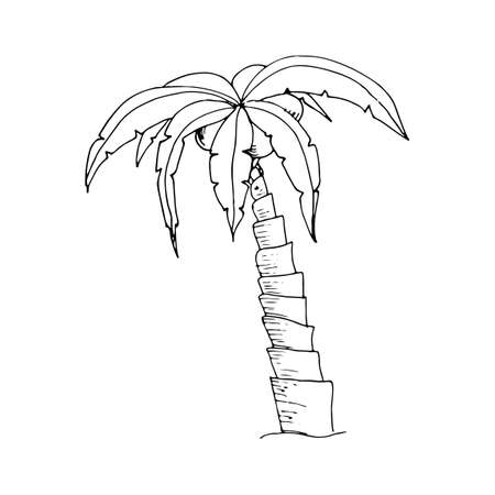 Hand drawn doodle palm tree. Sketch monochrome design element for t-shirt prints. Tropical nature coconut tree. Vector illustration isolated on white