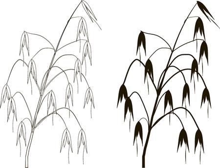Zwart-wit grafisch silhouet en overzicht van haver, vectorillustratie