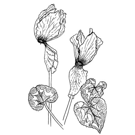 Monochrome cyclamen, hand drawn sketch of plant stock vector illustration for web, for print Ilustracja