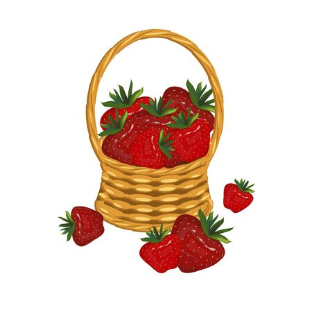 Strawberry in basket wicker with a vine. Red berry art design elements object isolated stock vector illustration for web, for print