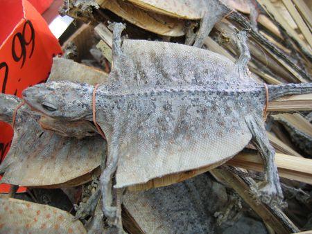 indigenous medicine: Lizard-on-a-Stick Stock Photo