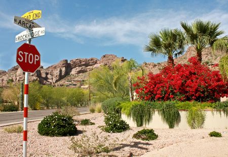 Stop sign and colorful vegetation in a Phoenix suburb on a sunny day