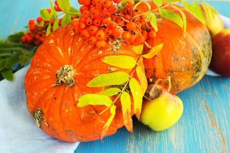 Fall harvest concept - pumpkins, apples and wild ash on blue grunge wooden table. Selective focus Stock Photo