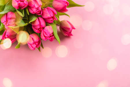 Pink tulips on pink background 免版税图像 - 163373344