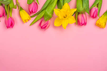 Yellow daffodils and pink tulips