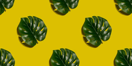 Seamless green monstera leaf pattern