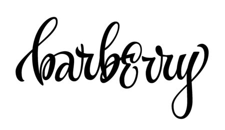 Barberry - vector hand drawn calligraphy style lettering word. Isolated script spice text label. Labels, stikers, packages design element.