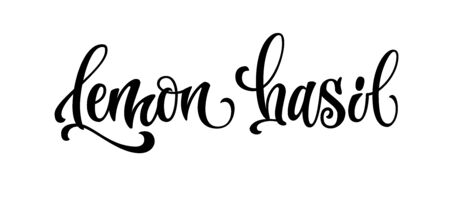 Lemon basil - vector hand drawn calligraphy style lettering word. Isolated script spice text label. Labels, stikers, packages design element.