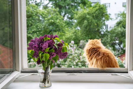 Red-haired cat sitting at open window, enjoying the moment and looking outside. Comfort home zone. Good moments, reducing stress concept