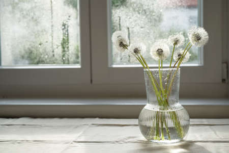 White dandelions in glass vase on the window at kitchen at rainy day. Stress reducing concept still life. Copy space Stock Photo