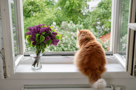 The ginger cat enjoying the moment and looking outside at the open window on spring time. Comfort home zone. Good moments, reducing stress concept