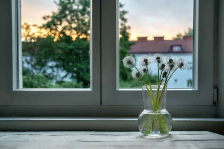 White dandelions in glass vase on window at kitchen in the evening during the dawn. Stress reducing concept. Copy space