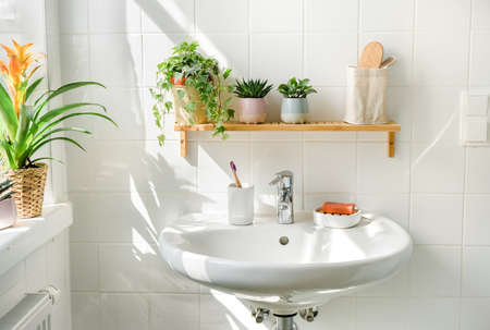 White bathroom with a sink next to a window at sunny day. Green plans on shelves and shadows on the background. Zero waste, eco friendly products, sustainability. Urban jungle. Wellness Stock Photo