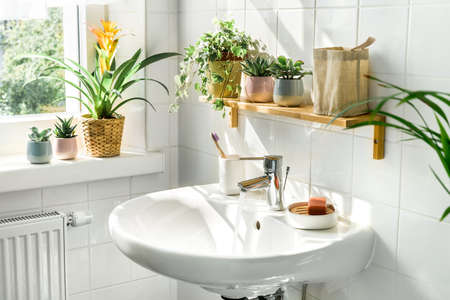 Modern white bathroom in eco-friendly sustainable style. Many green plants and shadows from sunlight on the wall. Zero waste, eco friendly products, sustainability. Urban jungle. Wellness Stock Photo