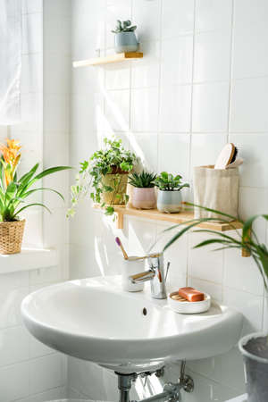 White bathroom with a sink next to a window. Green plans on shelves and shadows on the background. Zero waste, eco friendly products. Urban jungle. Wellness