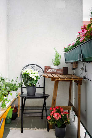 Green and homely balcony with greens and flowers on summer time. Hobby gardening. COnfort home zone Stock Photo