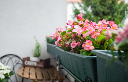 Close up of beautiful pink flowers at balcony. Comfort home zone. Gardening