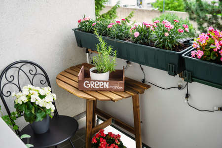 Homely green baclony on summer time. Hobby gardening. Stress reducing concept