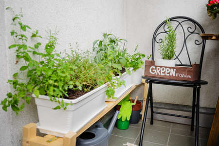 Close up of growing greens on balcony. Hobby gardening at home. Comfort zone. Stress reducing concept Stock Photo
