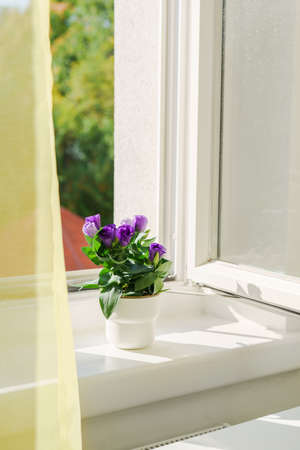Potted flower eustoma on windowsill and open window. Natural light at sunny day. Comfort home zone. Home hobby gardening Stock Photo