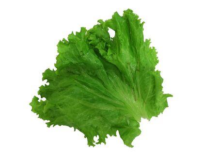 Lettuce Green vegetable