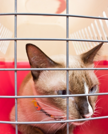 cat carrier: Cat carrier with cat inside