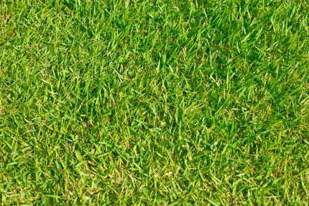 Close up of green grass of football field. Stock Photo - 16396612