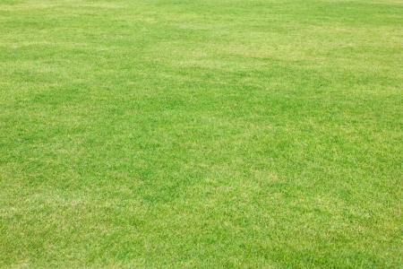 Green grass of football field  Stock Photo - 16465297